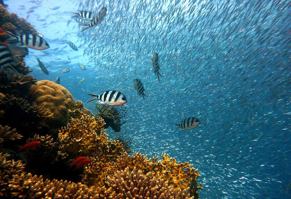 魚 サンゴ礁