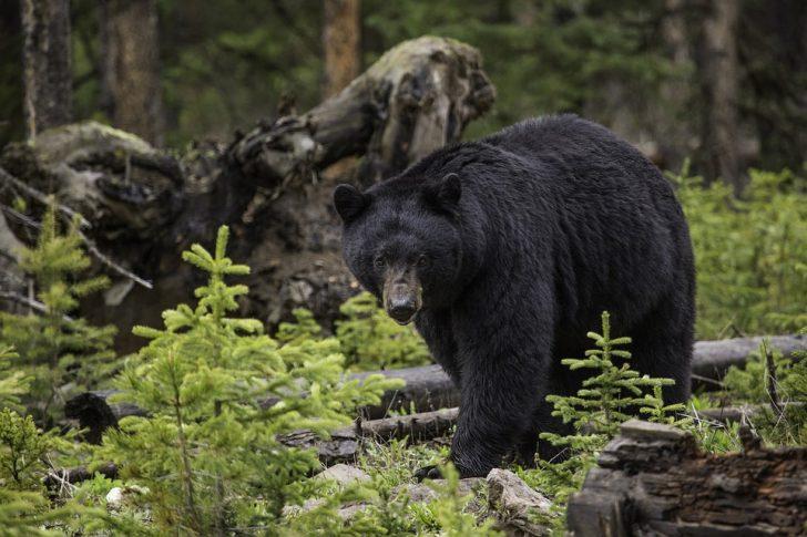 秋田県熊事件!出没数増加理由、それでも危険承知で山に入る?